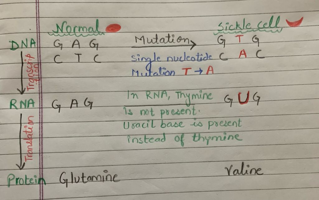 Sickle cell Anemia mutation