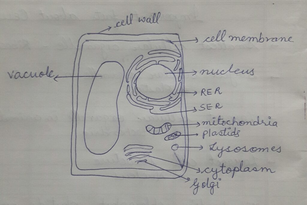 Fig: Plant Cell